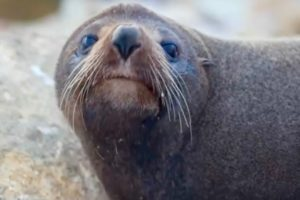 Social distance for people and seals is 20 metres – DOC