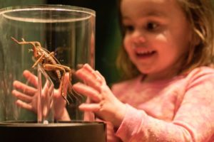 130,000+ summer swarm on Te Papa's Bug Lab