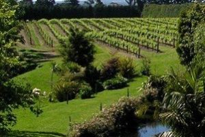 Northland winery & hospitality businesses up for sale