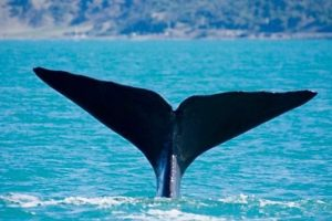 """Whale Watch's Ngapora """"keen to contribute"""" to regions"""