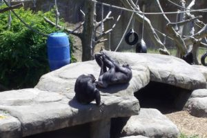 New zoo rules to keep animals contained