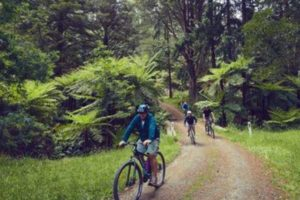 TRC: Cycle trail could generate $131m over 20 years