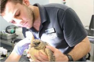 Kelly Tarlton's: NZ's first interactive turtle rehabilitation plan launches