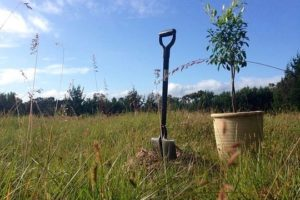 Air NZ, government scope new tree planting fund