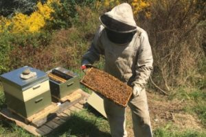 All abuzz with bees for The Rees