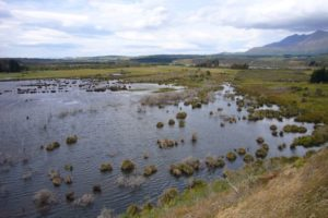 Christchurch secures international wetlands conference