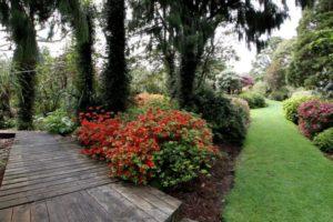 $6m proposed for Taranaki rainforest garden
