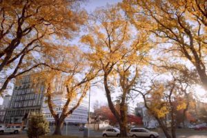 Dunedin pitches for autumn visitors