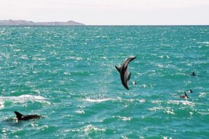 Dolphin tour operators push back on Otago uni research