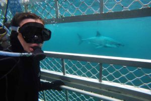 Shark Cage Diving Bill voted down