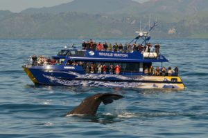 Whale Watch secures $1.5m from assets protection programme