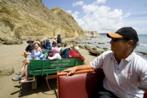 Gannet Beach Adventures resumes Cape Kidnappers tours