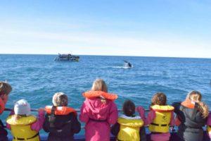 Whale Watch Kaikōura rewards local children post-quake