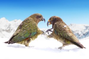 Trojan's NZSki leads bumper $350K conservation pledge