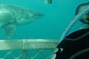 MP: Law can be changed to allow shark cage diving