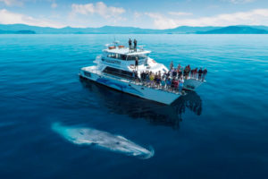 Operators fund $100k whale and dolphin research