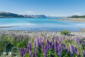 Health warning lifted at Lake Tekapo