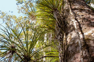 DOC closes 10 more tracks to combat kauri dieback