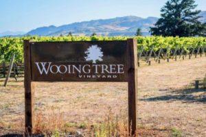 New wine tourism venture for Otago