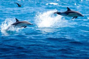 Tauranga's Bay Explorer launches new marine tour