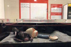 Kiwi's eager arrival marks strong start to hatching season
