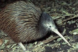 Help sought for animal care at Otorohanga Kiwi House