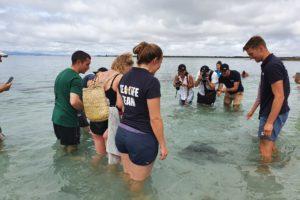 Tourism award winner helps return turtle to the wild