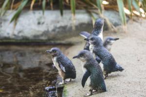 National Aquarium launches Penguin of the Year campaign