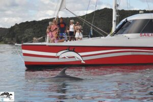 Bay of Island's Carino Wildlife Cruises wins WCA certification