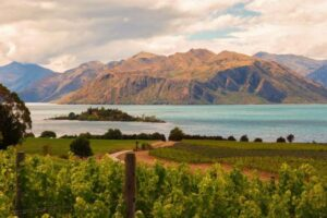 NZ vineyards recognised as top wine destinations