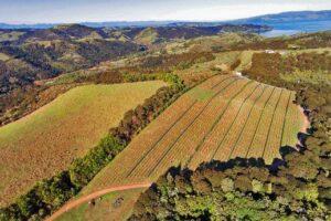 Waiheke vineyard comes to market