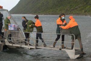 Kapiti Island remains predator free – DOC