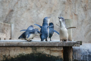 Penguin of the Year voting begins