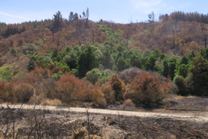 Eves Valley reserve recovering from fire