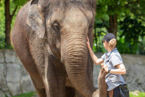 Auckland Zoo to rehome elephants