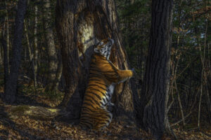 Museum to host Wildlife Photographer of the Year