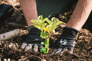 "TNZ launches ""plant a forest of the future"" campaign"