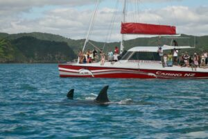 Operators welcome sanctuary plan as private vessels pressure dolphins