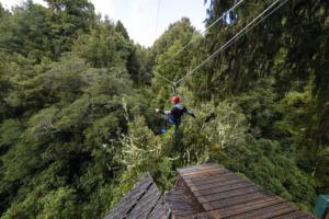 NZ experiences top TripAdvisor plaudits